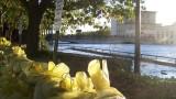 Northfield Flood Sandbags